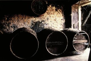 Row of casks