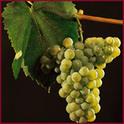 Wine_image_1